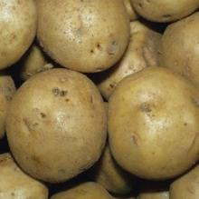 -Grade =A Fresh Potatoes for sale
