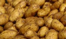 Irish potatoes-- for sale..Top quality-