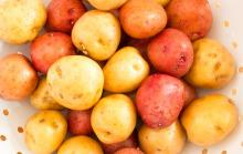 -Quality -Fresh Irish- Potatoes for b ulk export-