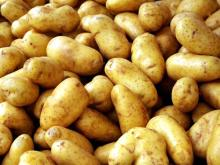 Super Grade Fresh Holland Potatoes.- Fresh .Irish Potatoes French. Potatoes for sale.