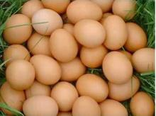 PURE INDIAN COUNTRY CHICKENS HATCHING EGGS(AL-NOOR 100)