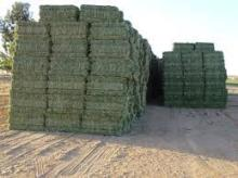 Alfalfa hay with high protien for animal feeding