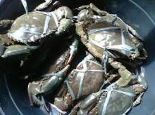 Live Mud Crabs , Red King Crabs , Soft Shell Crabs , Blue Crab and Blue Swimming Crab