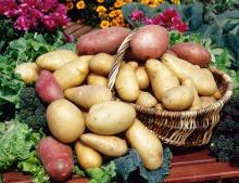 Fresh- potato -/yellow Irish- Potatoes-.