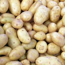 Fresh potato /yellow Irish Potatoes