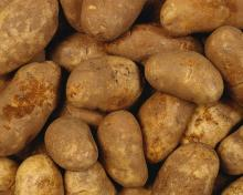Fresh/ potato /yellow Irish,, Potatoes/,,,