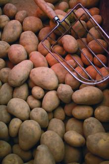 Chinese Fresh/ holland potato/ hot for sale/