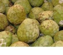 best quality noni fruits for sale at very good price