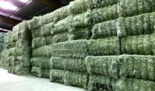 Alfalfa or lucerne hay for feeding farm animals