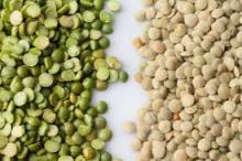 Lentils Green