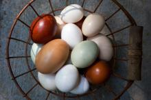 Fresh Table Chicken Eggs ( White and Brown)