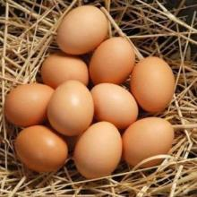 Fresh Brown Chicken Eggs