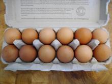turkey hatching eggs