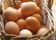Sell Fresh Brown Chicken Eggs