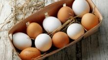 Fresh Chicken Table Eggs , Chicken Eggs price , yellow yolks white chicken eggs price in bulk