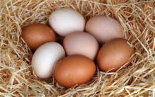 Vietnam OEM High-Quality Canned Quail Egg in Brine 950g