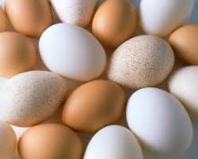 sell Quality Fresh Brown Table Eggs Chicken Eggs
