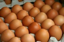 sell Egg