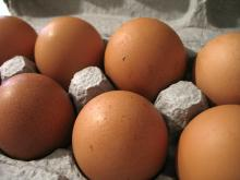 sell Promotion price eggs good quality