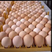 ,.Wholesale Fresh Brown \Chicken Eggs