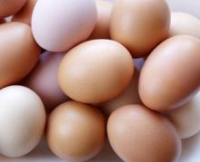 sell Fresh Farm White and Brown Chicken Table Eggs