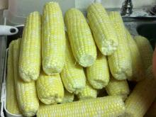 Hot sale Tasty Canned Sweet Corn wholesale