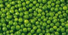 Competitiv E Price Quality Canned Green Peas