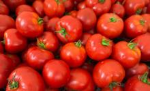 Fresh- Tomato, Fresh Cherry -Tomato, Fresh Plum Tomatoes For Sale