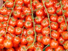 best -and fresh -tomatoes for- sale at very good price