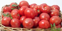 Hot Sells High Quality Tomatoes A Grade