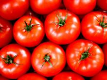 GRADE A FRESH RED TOMATOES FROM BRAZIL