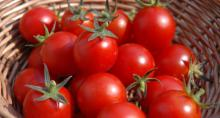 -Best Quality Fresh -Tomato from Egypt-