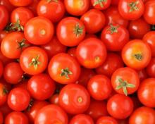 RED- FRESH TOMATOES= READY FOR[ SALE IN BULK
