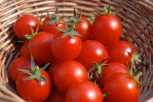 Red Color Fresh Tomatoes[