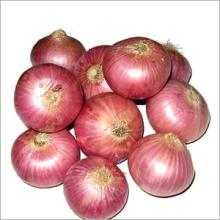 Wholesale Fresh Red Onions , Round Fresh Red Onions Fresh Cheap Onion