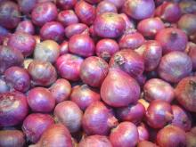 Red Onion,. Exporters From India