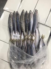 Frozen Whole  Round   Scad   Fish