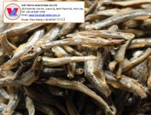 Dried Anchovy Best price from Vietnam