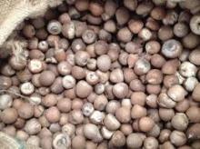 Dried Betel Nuts / Betel Nuts / Slice Betel Nuts