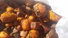 Cow/ox/cattle Gallstones