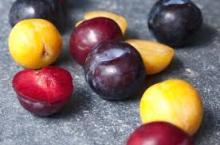 Fresh Plum Fruits
