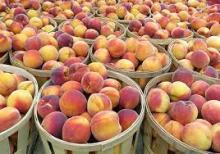 Peruvian Fresh Peaches