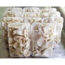 Oyster Mushroom For Sale