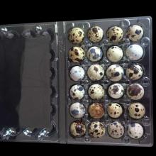 Hot Sale High quality Clear PET Quail Eggs & Packaging Tray / Box / Carton