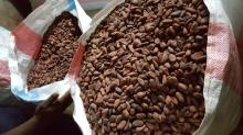 Premium grade Dried Raw COCOA BEAN Best Price