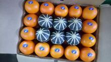 fresh fruits,naval orange,Valencia ,Egyptian Citrus