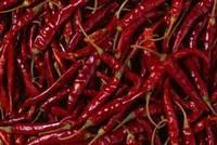 Hottest Dried Red Chilli (Teja/S17)