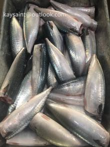 frozen pacific mackerel hgt