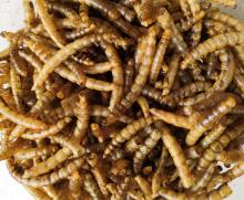 Dried Mealworm Factory Breeding & Processing Centre