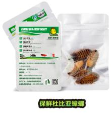 Eco Fresh Dubia cockroach Feed For Fish /Reptile